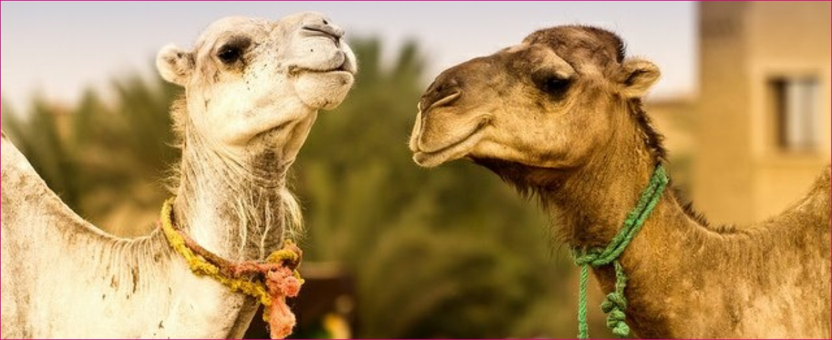 private 2 days tour from Marrakech to Zagora - Marrakech tour package